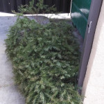Dead Christmas Trees, Free National Park Days, Bop-It!, and so much more!